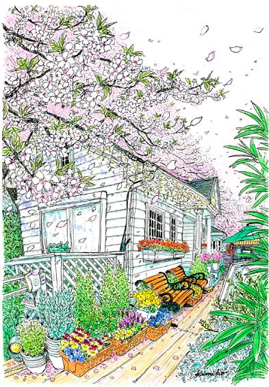 桜の頃。久しぶりにカナルカフェのデッキに下りてみる。風が吹いて花びらを空高く巻き上げ、空一面が桜色になった。なつかしさで胸がいっぱいになる。また桜の頃ここに来られるだろうか。 CANAL CAFE