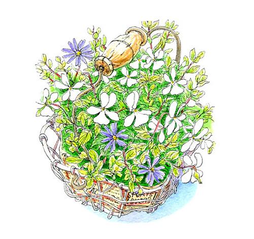 なんて美しい。清楚な白い花が愛らしく、力強く咲いている。育てた人の丁寧な暮らしぶりを感じた。