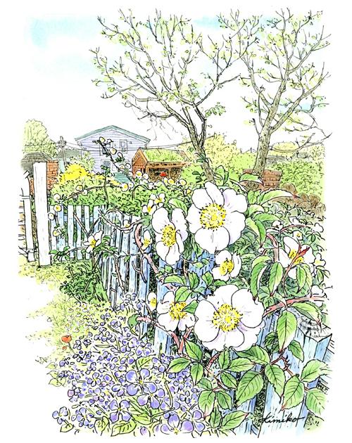 クレアホーム&ガーデン。薪割の音がする。裏庭に回ってみると、垣根の薔薇がきれいに咲いていた。足元にはこぼれて咲いた花大根。