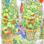 浅草寺境内で開かれるほおずき市。ほおずきの色・風鈴の音・売り声・アナウンスの声・線香の香。夏、みつけた。