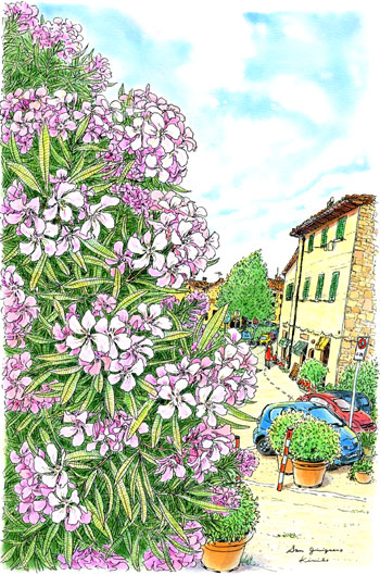 サン・ジミニャーノの緑の門を出ると道はだらだら下り坂。ピンクの夾竹桃が花盛り。ねじれている花びらを一つ一つ描くのが面白くて、時間を忘れてしまった。