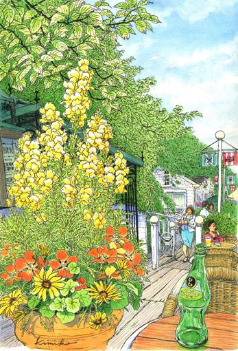 葉桜の頃、お天気に誘われて飯田橋へ。個展が終わって水辺のカフェで一日のんびり。黄色い花のぷくぷくした形が可愛くてスケッチ。CANALCAFE