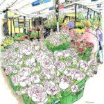 駅前の花屋さん。ピンクの芍薬の名を「ピオーナ」と教わり、買って帰った。8時を回ってもいつまでも日の沈まない夕方